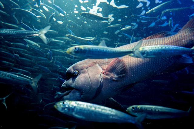 深海魚の画像