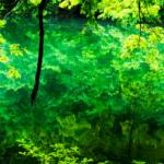 池の水ぜんぶ抜く 沖縄ハーソー公園の場所やロケ地は?結果や魚を調査!